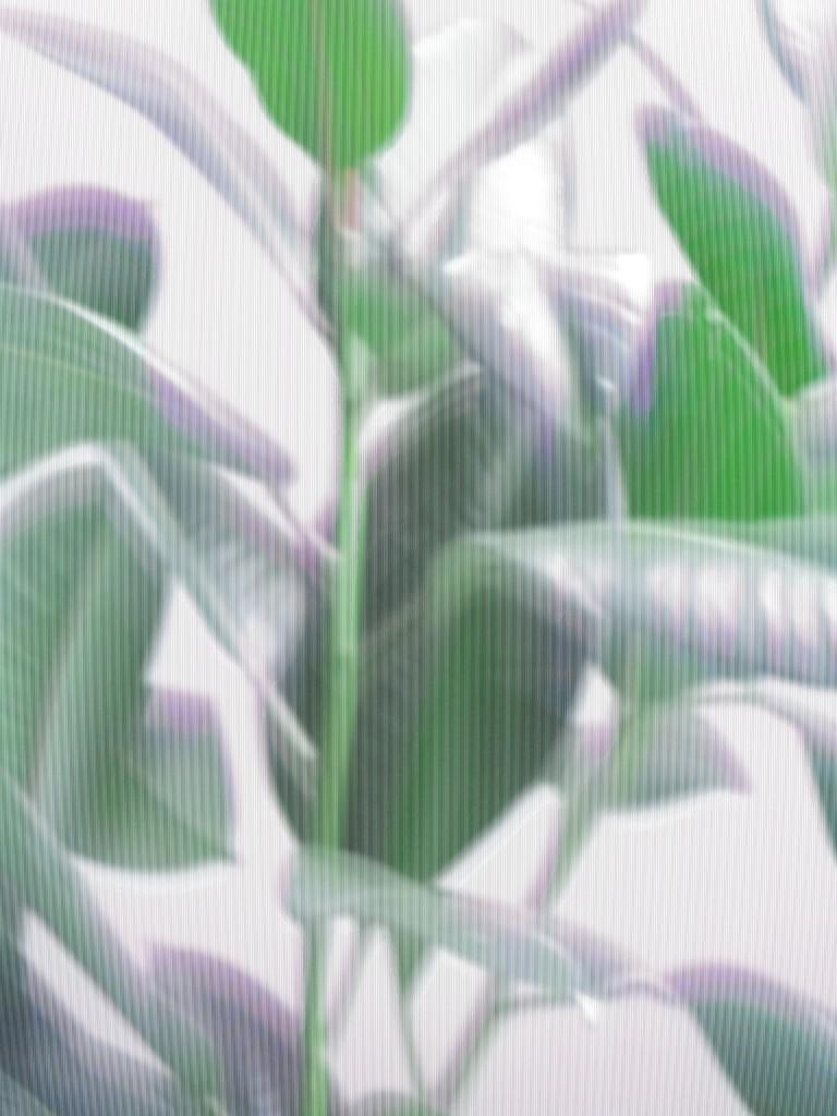 AlikivanderKruijs_Plant